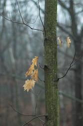 Copac dupa ploaia de toamna